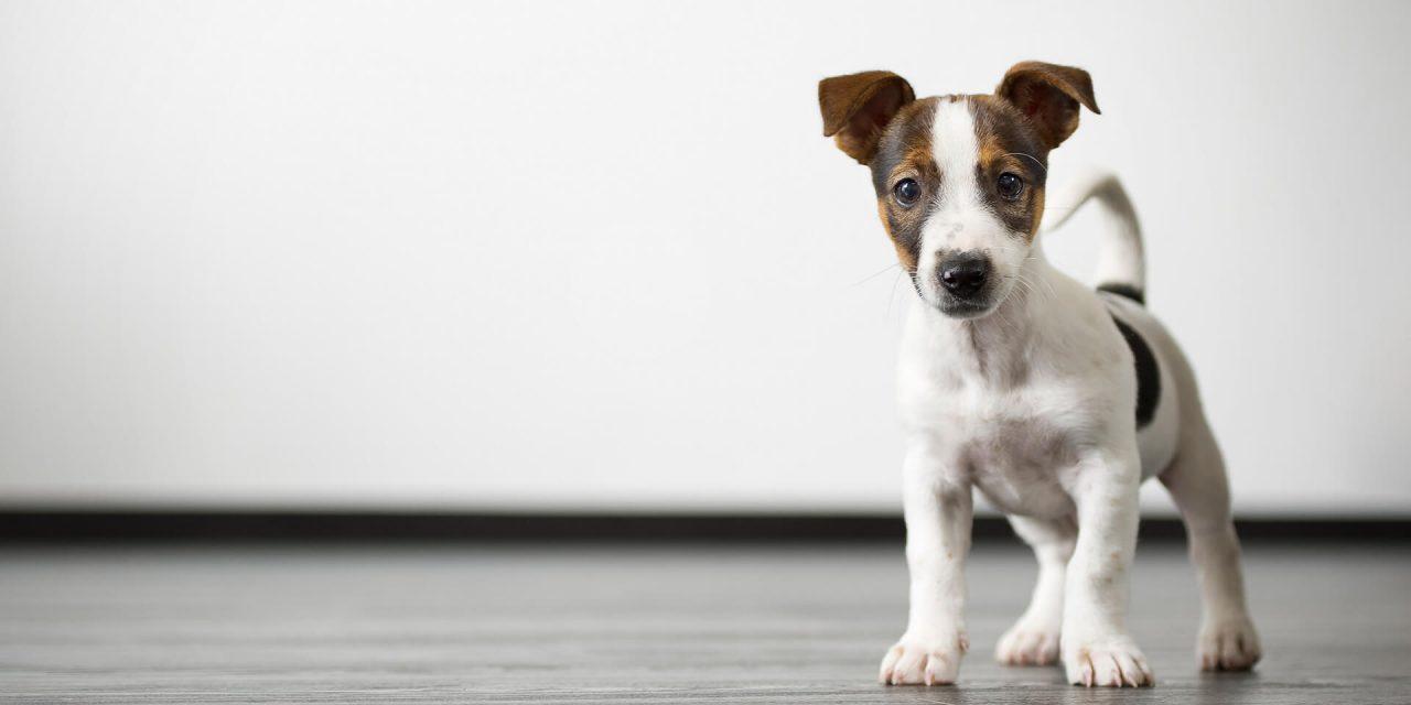 PAWS For Life – Animal Welfare & Protection Society